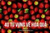 Dịch thuật 40 từ vựng về hoa quả dễ học
